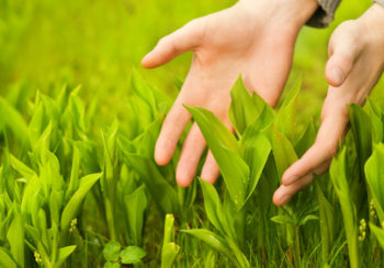 Naturheilmittel und Mikronährstoffe