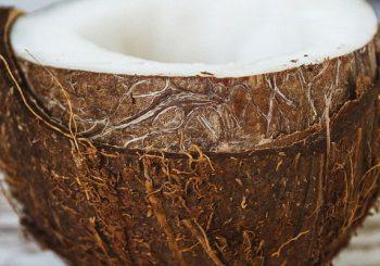 wie gesund ist Kokosöl