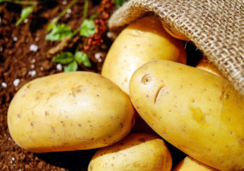 Molybdän in Kartoffeln